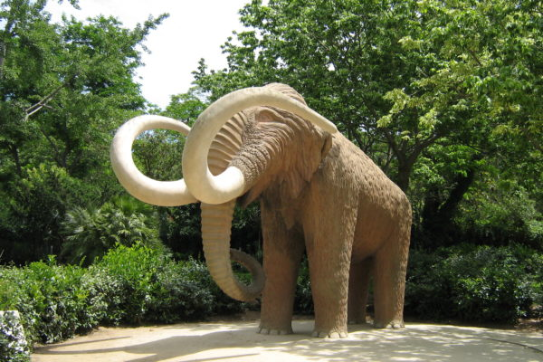 Parc De La Ciutadella Woolly Mammoth Barcelona