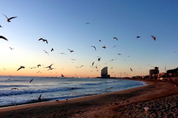4d8f Playa de San Sebastián de Barcelona 4ca24c9e Fb0e 8592 8a974079be32