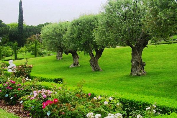 Парк Сервантеса (розарий)