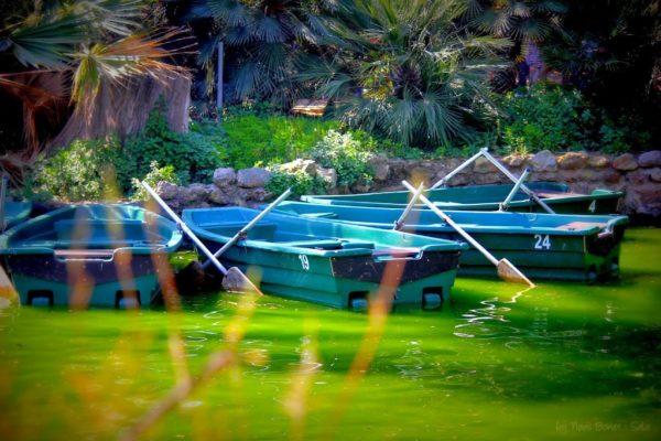 Lomo boats