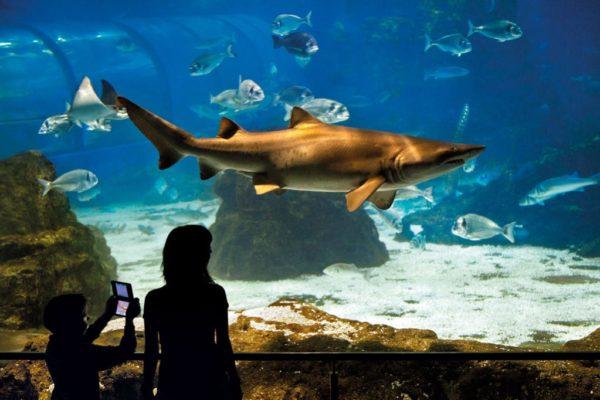 Oceanario acuario de Barcelona 2