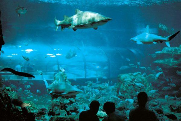 Oceanario acuario de Barcelona
