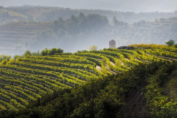 The wine region Priorat