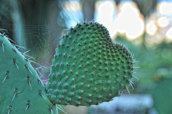 El parque de los cactus en Barcelona