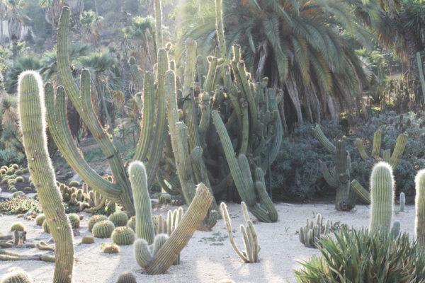 Cactus Park Montjuic Crafttheway 18