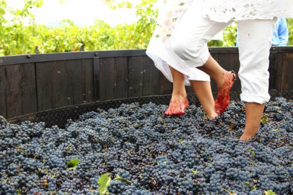 Праздник молодого вина в Борне