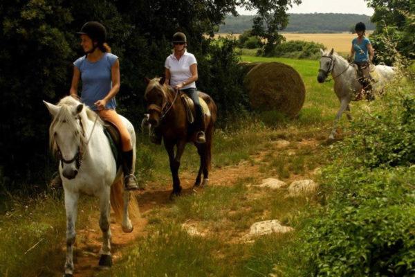 Прогулка на лошадях среди вулканов