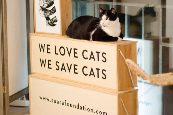 Suara Foundation Gatos Barcelona 1